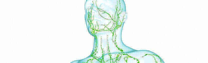 Как очистить лимфатическую систему?