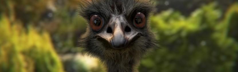 Emu tauki un to ārstnieciskās īpašības