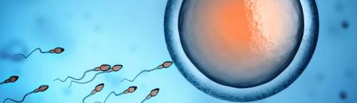 Testosterons un vīriešu neauglība